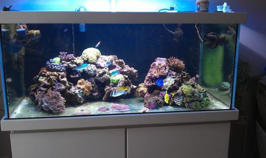 aquarium verre extra blanc