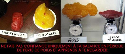 balance gras muscle