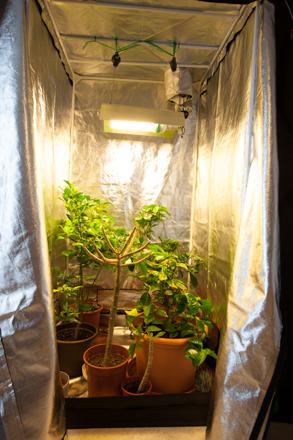 box plantation interieur