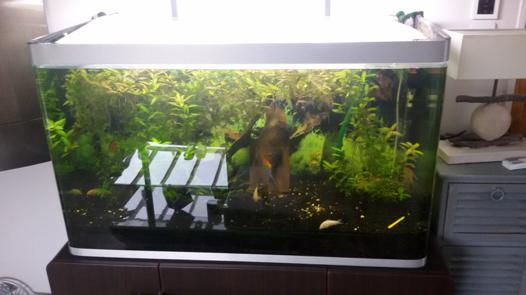 aquarium a vendre neuf