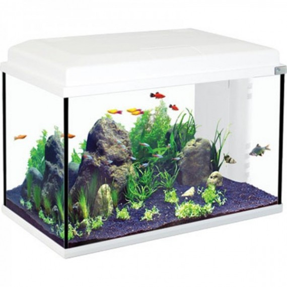 aquarium complet pas cher