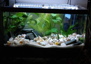 aquarium eclairage led