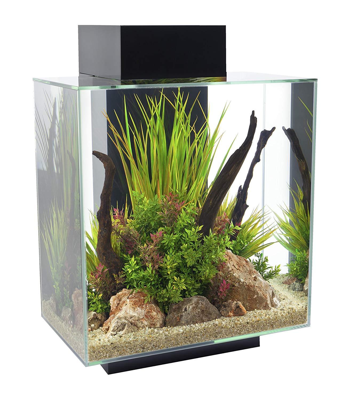aquarium edge glossy