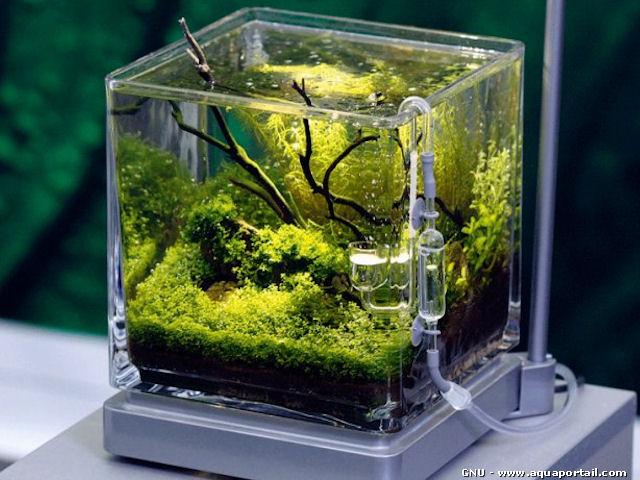 aquarium petit prix