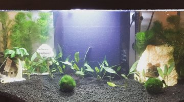 aquarium silencieux