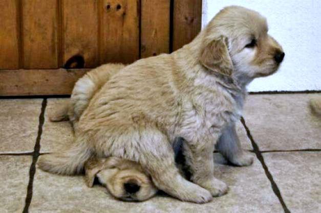bon coin chien