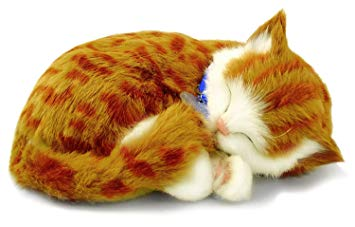 chat en peluche comme un vrai