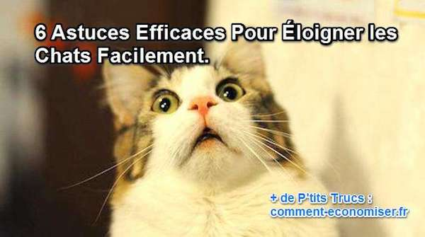 comment chasser les chats