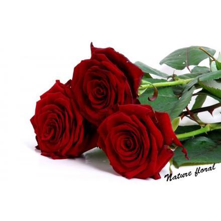 comment stabiliser une rose