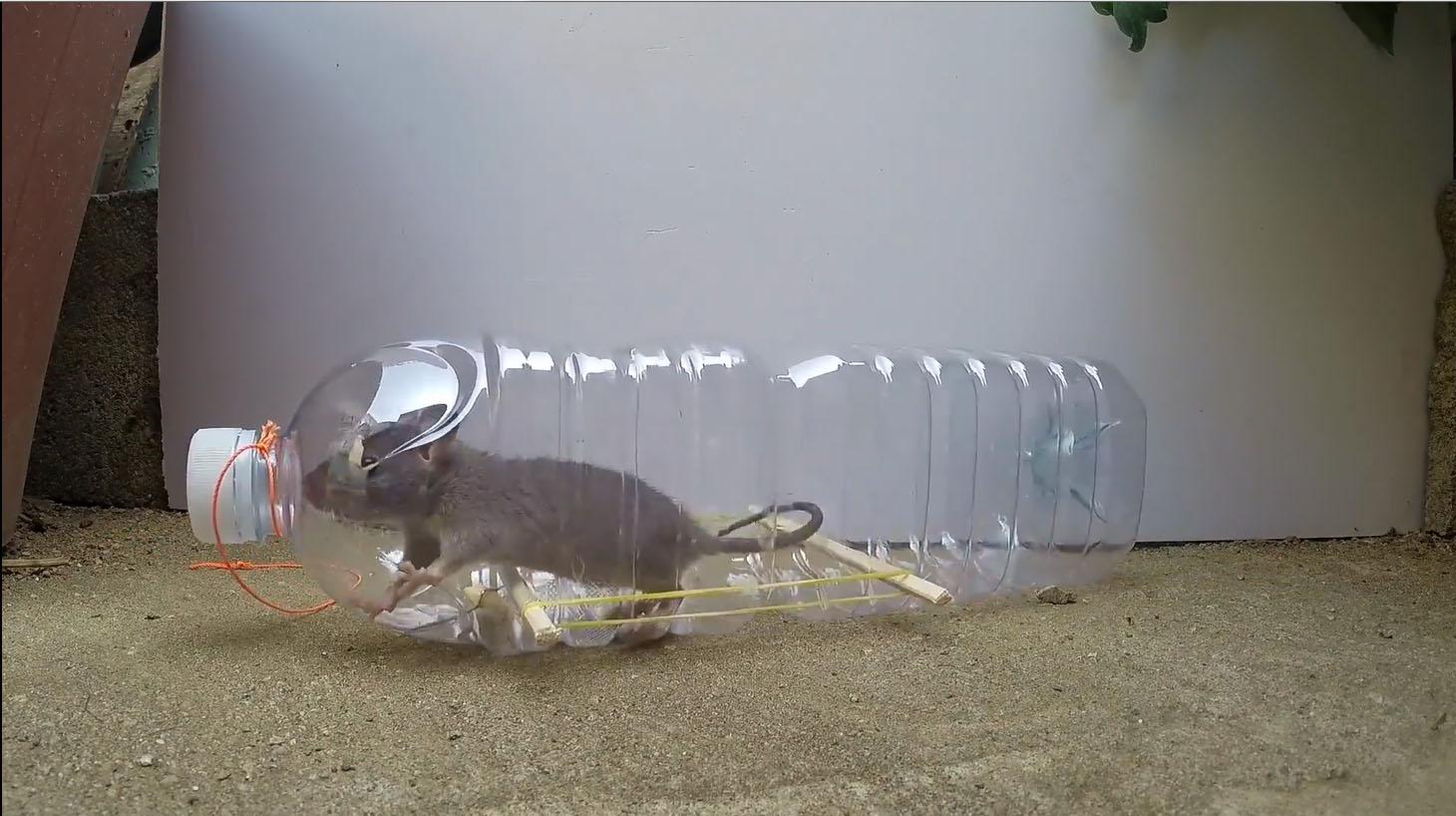 comment tuer une souris sans piege