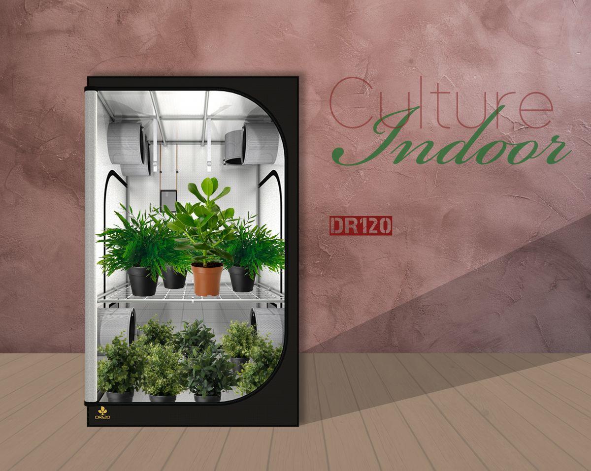 culture indoor
