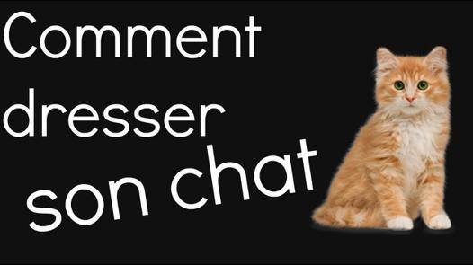 dresser son chat
