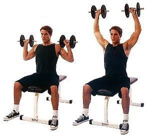 exercice épaule haltère