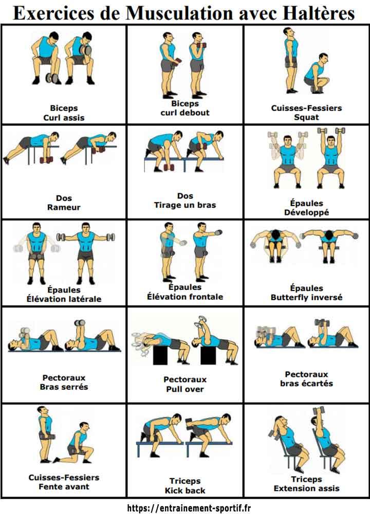 exercice haltère