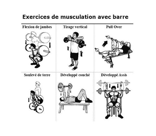 exercice musculation barre