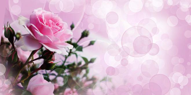 fond d écran avec des fleurs