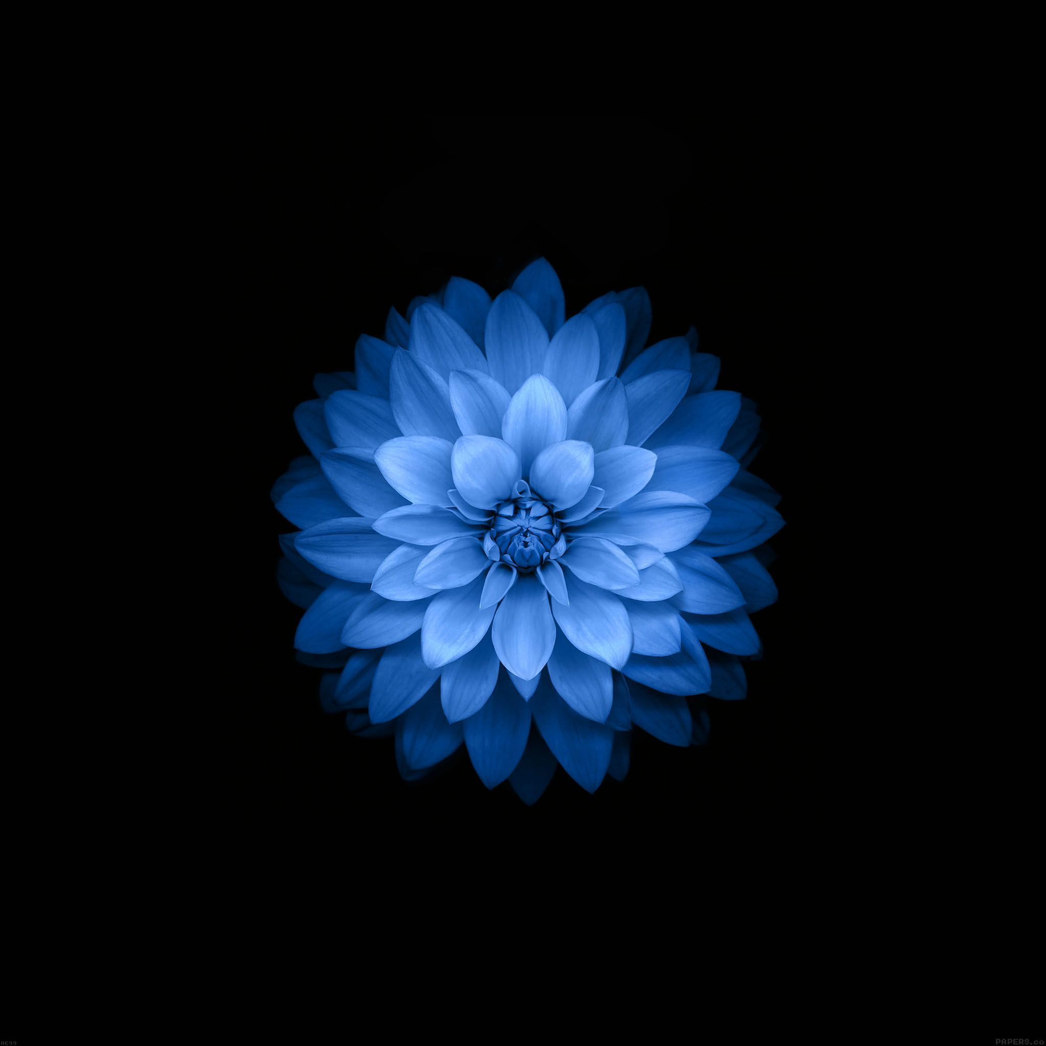fond d écran fleur iphone