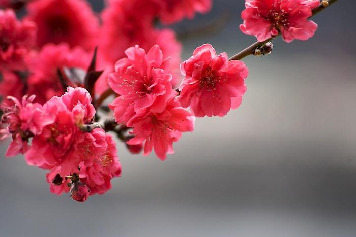 fond d écran fleur