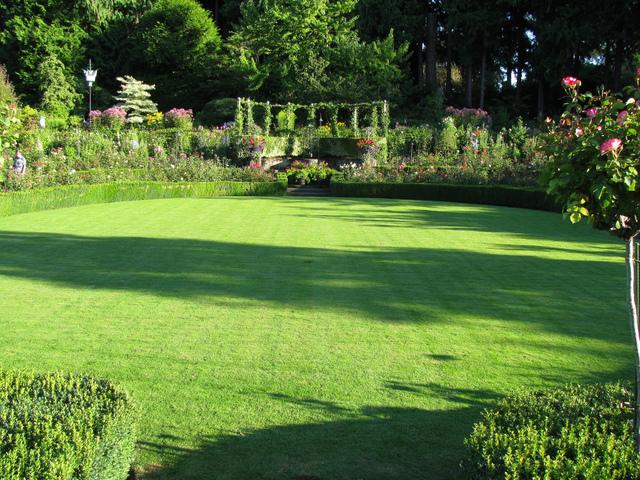 gazon jardin