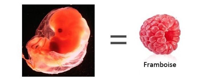 grossesse de 8 semaines
