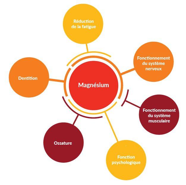 les bienfait du magnésium
