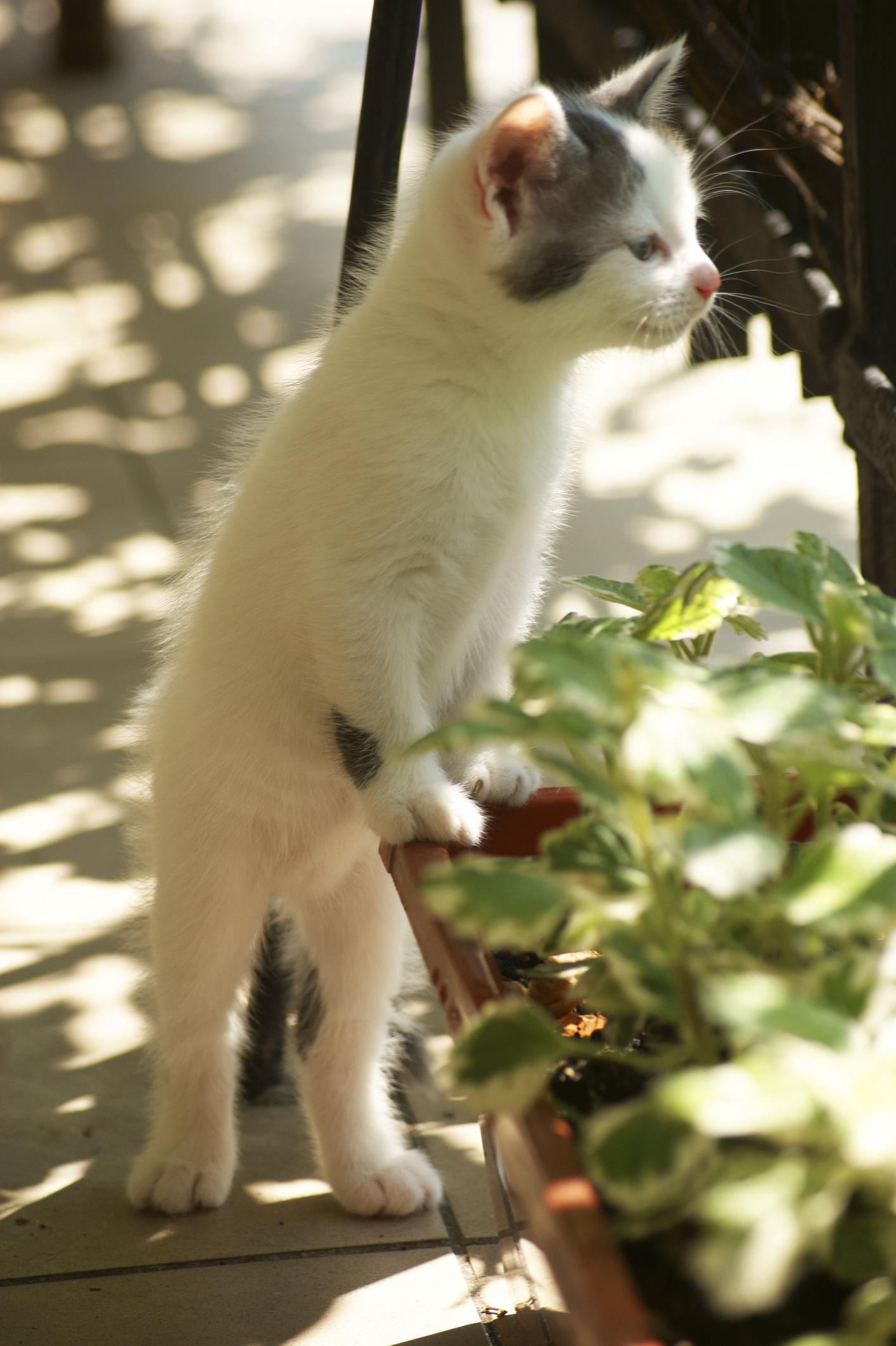 lutter contre les chats dans le jardin