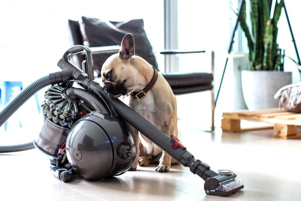 meilleur aspirateur balai pour poils d animaux