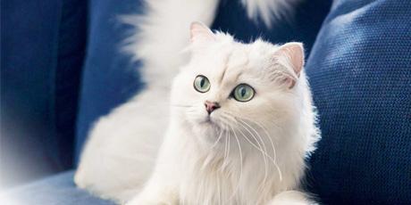 meilleur chat