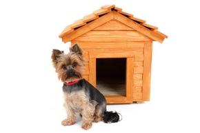 niche pour petit chien pas cher