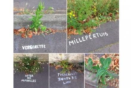 nom de végétaux