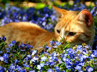 odeur qui repousse les chats