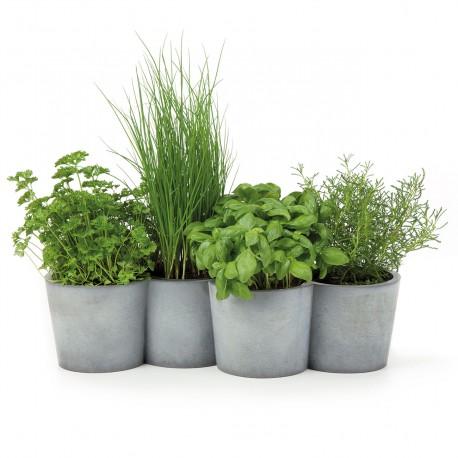 plante aromatique en pot