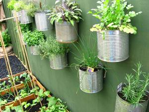 plante aromatique interieur