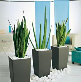 plantes truffaut