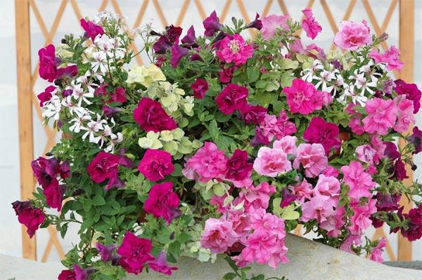 quelles fleurs pour jardinière