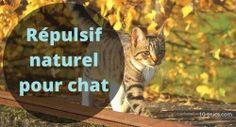 répulsif naturel contre les chats
