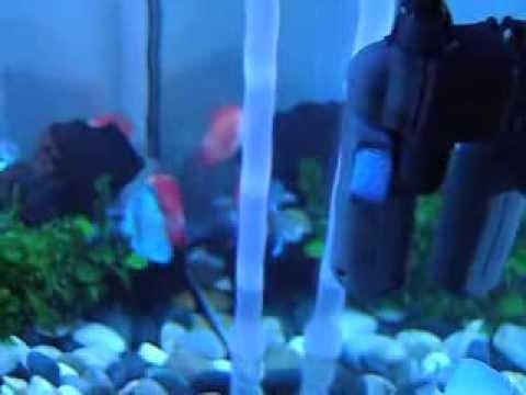 sterilisateur aquarium