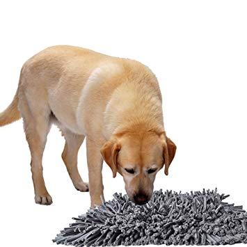 tapis d entrainement pour chien