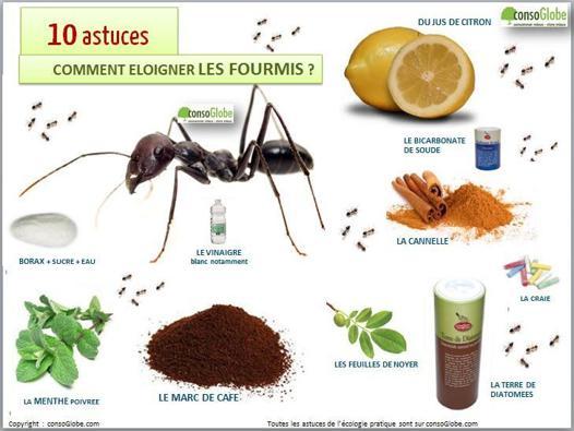 tuer des fourmis dans le jardin